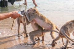 Affe trinkt Wasser von einer Flasche Lizenzfreie Stockbilder