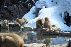 Affe-Truppe an der Snowy-Gebirgsheißen quelle Lizenzfreies Stockfoto