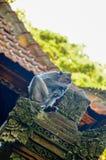 Affe, Ubud, Bali, Indonesien Lizenzfreie Stockfotografie