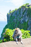 Affe in Uluwatu auf dem Rand Lizenzfreie Stockbilder