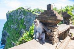 Affe in Uluwatu auf dem Rand Stockfotografie