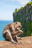 Affe in Uluwatu auf dem Rand Stockfotos