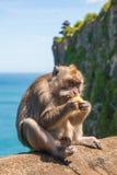 Affe in Uluwatu auf dem Rand stockbilder