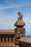 Affe in Uluwatu auf dem Rand Lizenzfreies Stockfoto