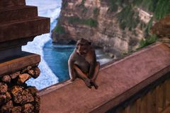 Affe an Uluwatu-Tempel - Bali Indonesien Lizenzfreie Stockfotografie