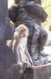 Affe in Uluwatu-Tempel, Bali-Insel Stockbilder