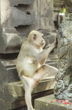 Affe in Uluwatu-Tempel, Bali-Insel Lizenzfreies Stockbild