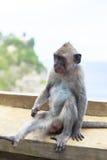 Affe in Uluwatu-Tempel, Bali-Insel Lizenzfreie Stockfotografie