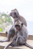Affe in Uluwatu-Tempel, Bali-Insel Lizenzfreies Stockfoto