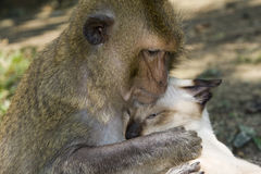 Affe umfaßt Katze Lizenzfreies Stockbild