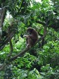 Affe und Affe in Singapur-Zoo Stockfoto