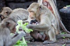 Affe und Baby, die Gemüse im Park essen Stockbilder