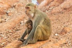 Affe und Babyaffe, der entlang der Touristen anstarrt Lizenzfreies Stockbild