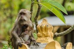 Affe und Babymakaken Stockbild
