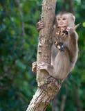 Affe und Banane Stockfoto