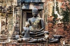 Affe-und Buddha-Bild Lopburi Thailand Lizenzfreies Stockfoto
