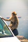 Affe und das Auto Stockbild