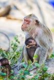 Affe und das Junge Stockfotografie
