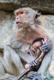 Affe und das Junge Lizenzfreies Stockfoto
