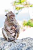Affe und das Junge Lizenzfreies Stockbild
