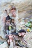 Affe und das Junge Stockfotos