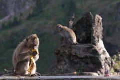 Affe und die Banane auf den Felsen Lizenzfreie Stockbilder