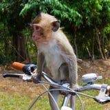 Affe und Fahrrad Lizenzfreie Stockfotografie