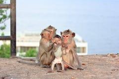 Affe und Familie Lizenzfreies Stockfoto