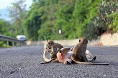 Affe und Familie Stockbilder