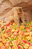 Affe und Früchte Stockfotografie