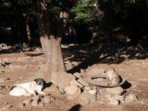 Affe und Hund in den marokkanischen Atlas-Bergen Lizenzfreie Stockbilder