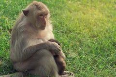 Affe und junger Affe auf grünem Gras, Weinlesefilter Stockbild