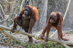 Affe und Natur Stockfoto