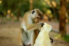 Affe und Rückstand Lizenzfreie Stockfotos