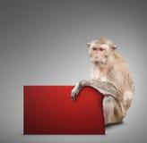 Affe und rote Karte Lizenzfreie Stockbilder