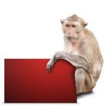 Affe und rote Karte Stockfotos