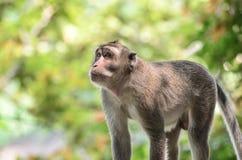 Affe und sein Leben stockfotografie