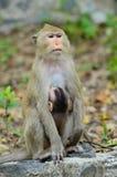 Affe und Sohn Lizenzfreies Stockfoto