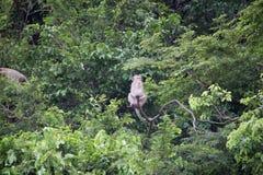 Affe und Wald Lizenzfreie Stockfotos