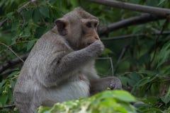 Affe und Wald Lizenzfreies Stockbild