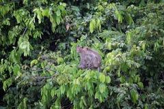 Affe und Wald Stockfotos
