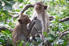 Affe und Wald Lizenzfreies Stockfoto