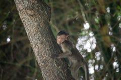 Affe und Wald Lizenzfreie Stockbilder
