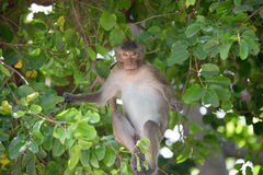 Affe und Wald Stockfoto