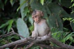 Affe und Wald Stockbilder