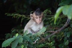 Affe und Wald Lizenzfreie Stockfotografie