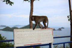 Affe und Weiß-Aufkleber Lizenzfreie Stockfotos
