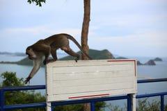 Affe und Weiß-Aufkleber Stockbild