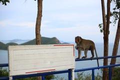 Affe und Weiß-Aufkleber Lizenzfreies Stockfoto