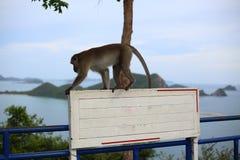 Affe und Weiß-Aufkleber Lizenzfreies Stockbild